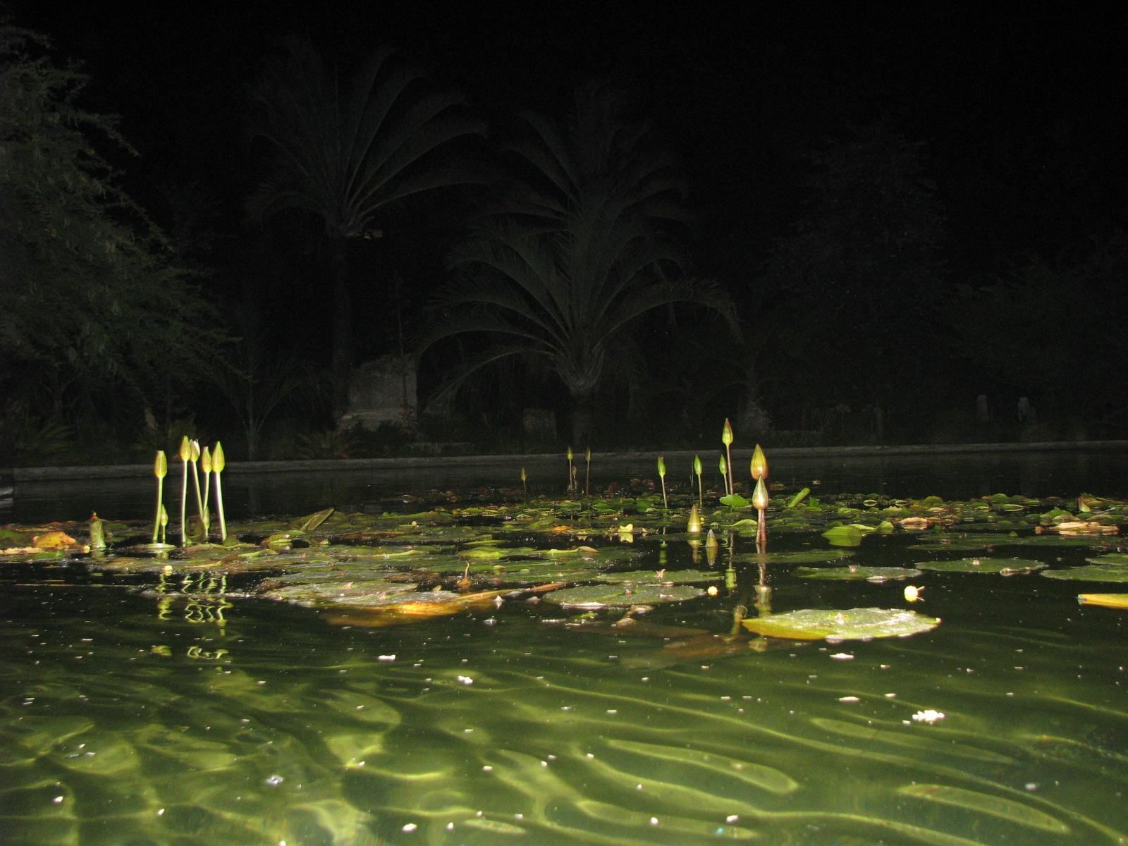 Pond Alchemy Miami
