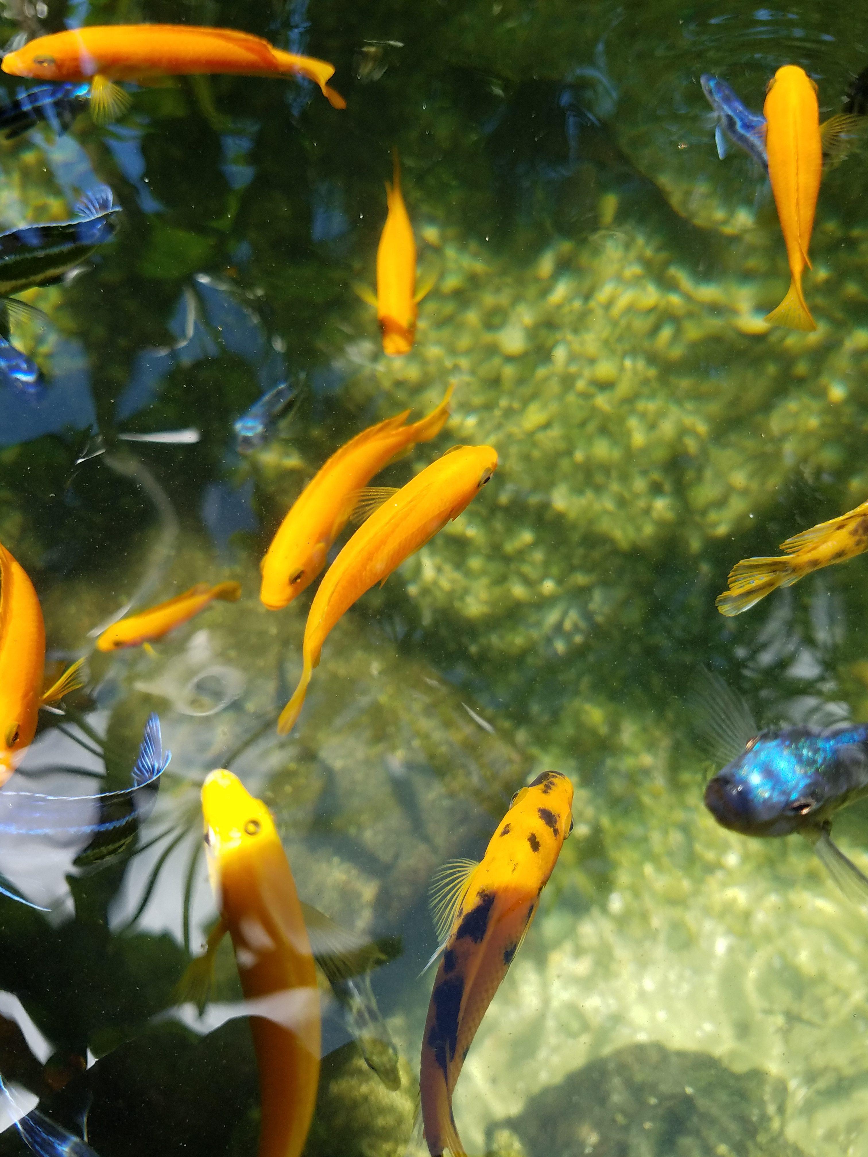 Cichlid Pond by Pond Alchemy Miami, Florida
