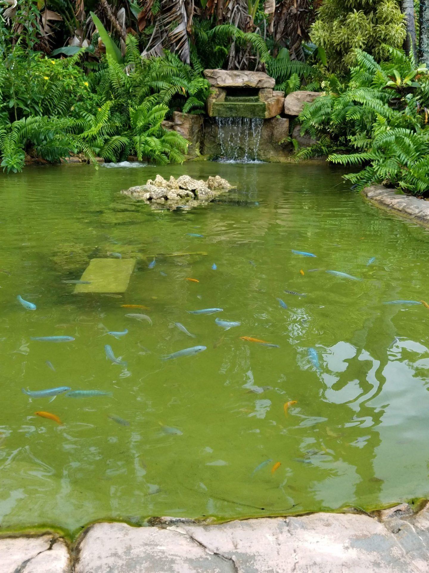 Pond Alchemy Miami Pond Builders