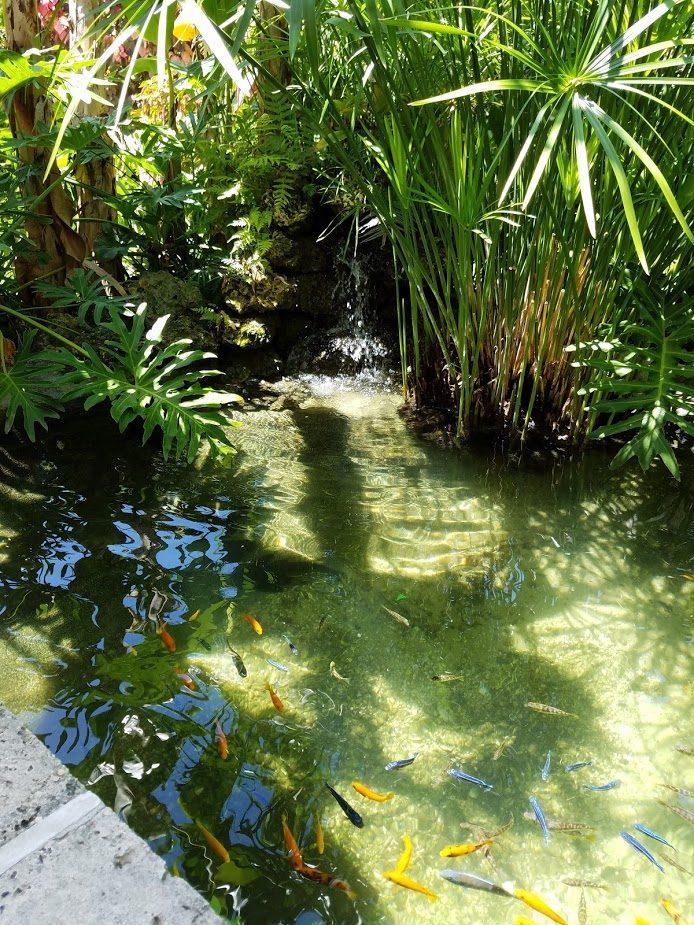 Tropical Oasis by Pond Alchemy