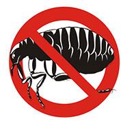 bed bug exterminator independence, mo