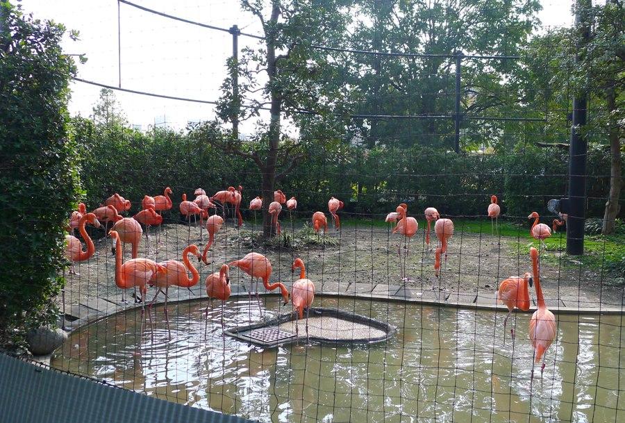 The (fighting) Flamingos!