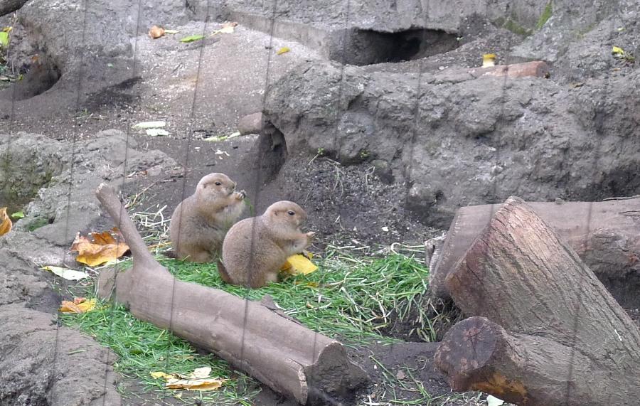 Cute prairie dogs!