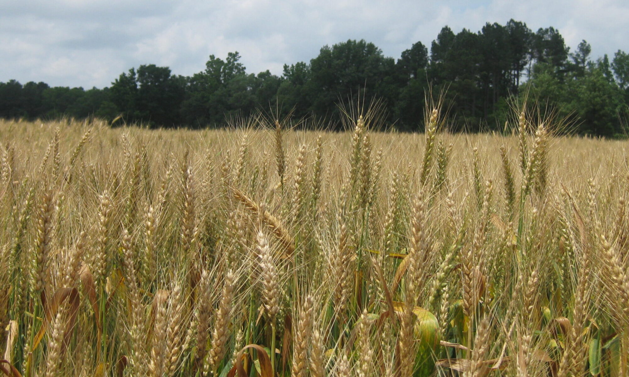 NORTH CAROLINA Small Grain Growers Association