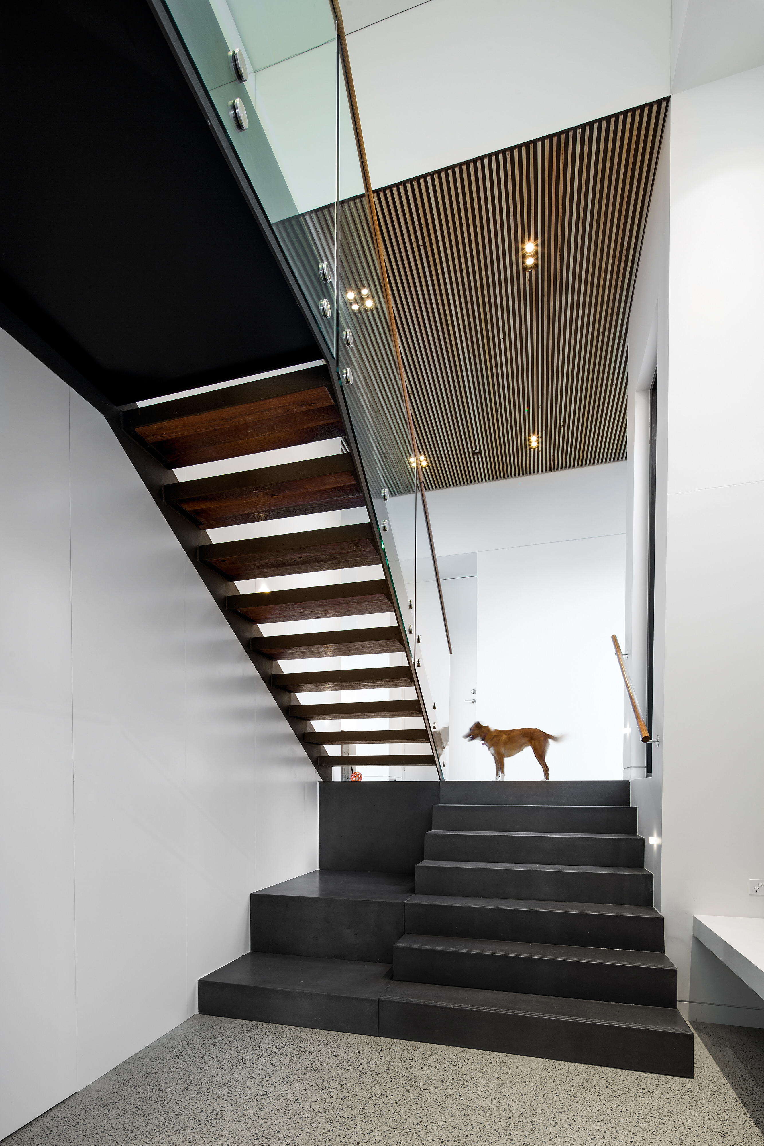 architectural designed staircase with dog standing on landing