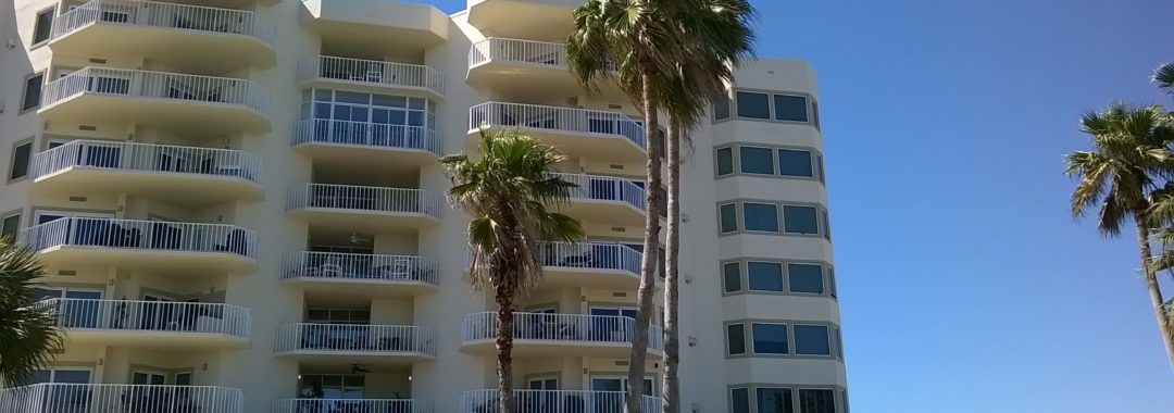 Gulf Shore Dr, Destin, Florida - Washingtonia Palm 01