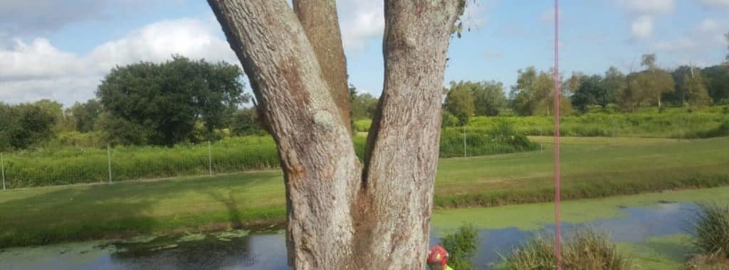 Tree Services Available In Okaloosa County Featured Image