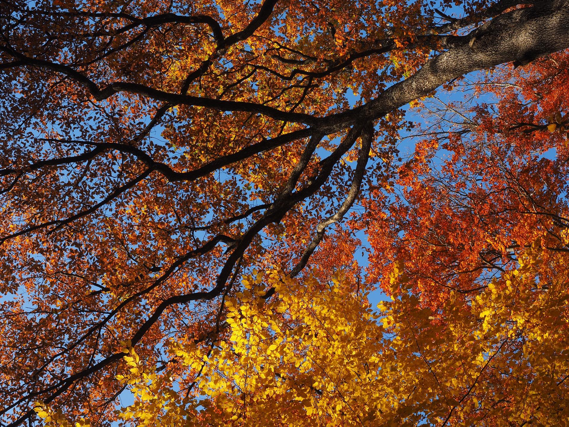 Tree Service - Care