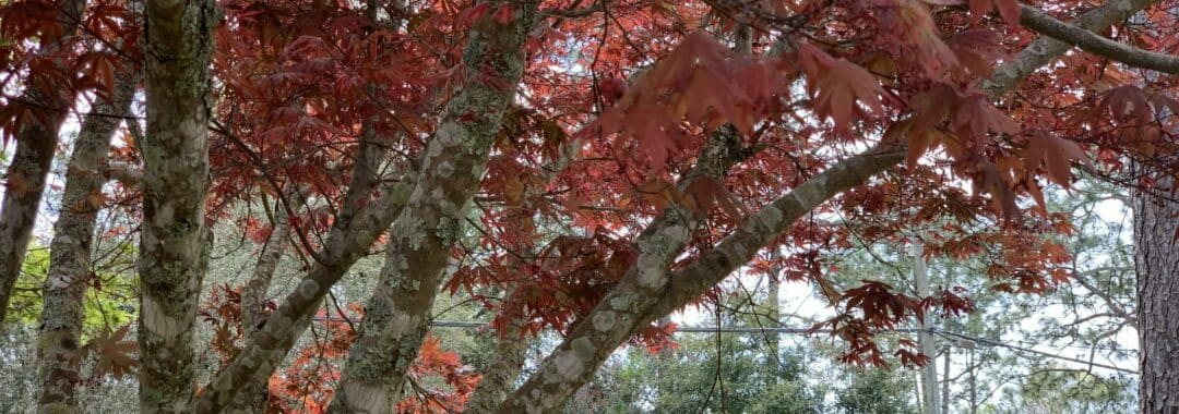 Local Fall Tree Services In Northwest Florida Featured Image
