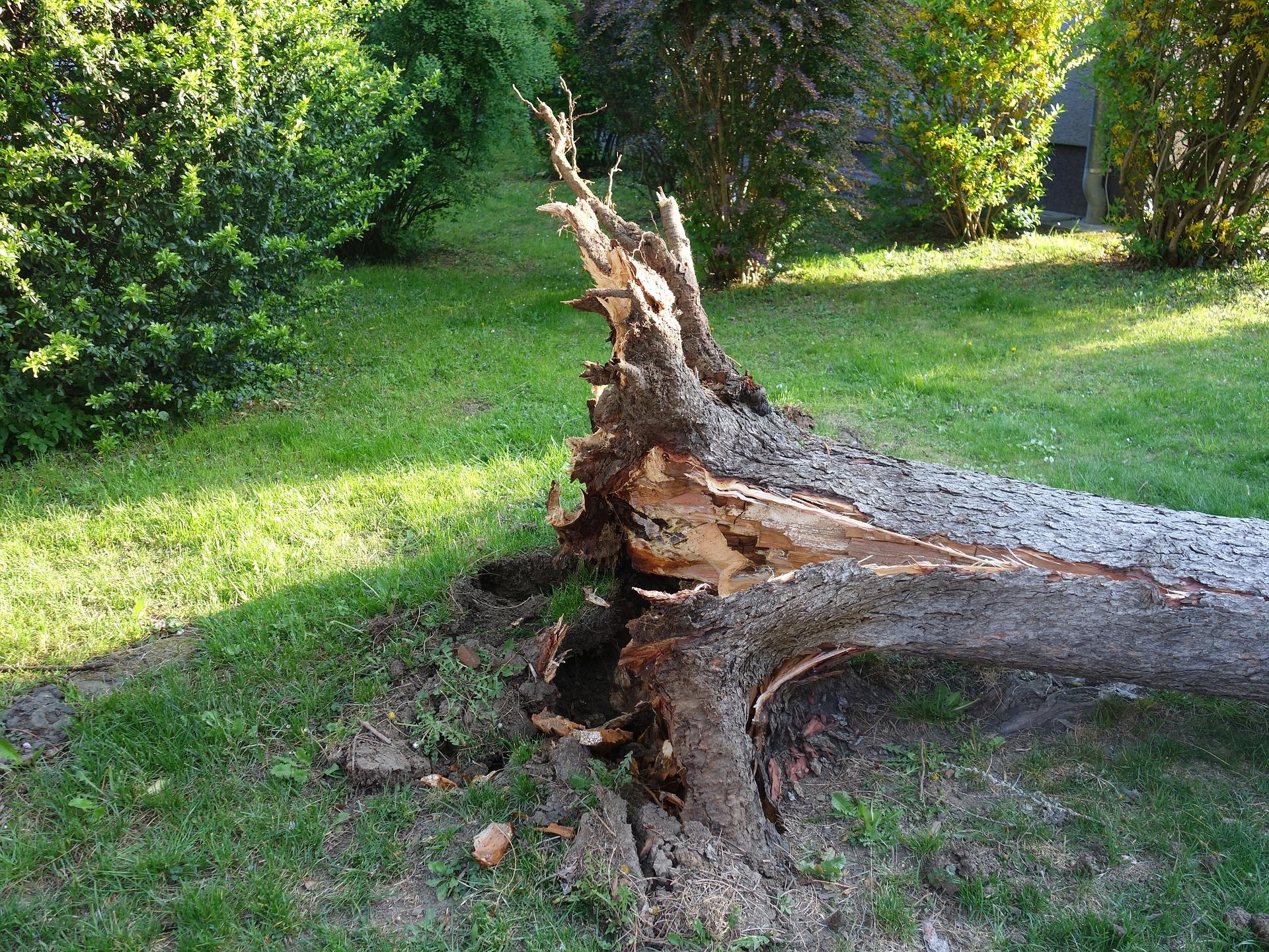 Tree Service - Removal