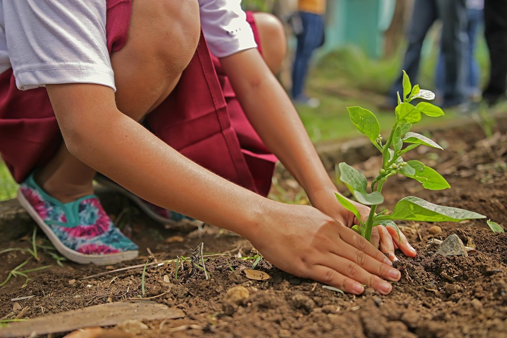 Tree Service - Planting