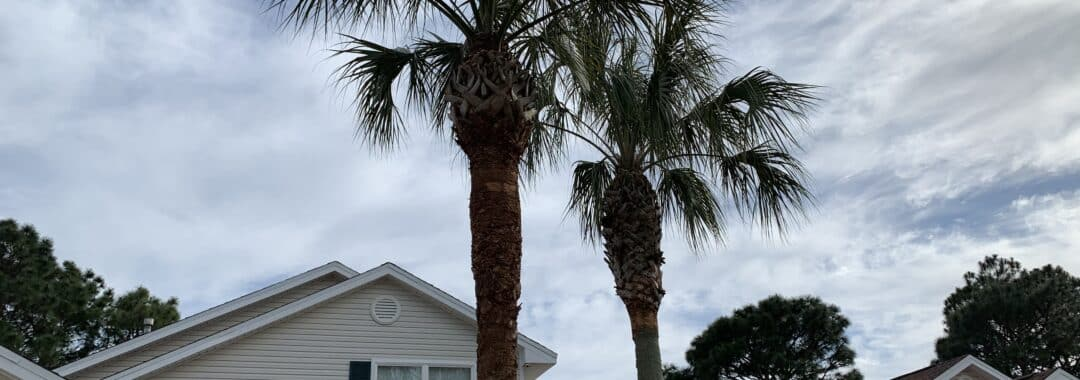New Leaf Arboriculture - 05-12-19 - Fort Walton Beach - 002