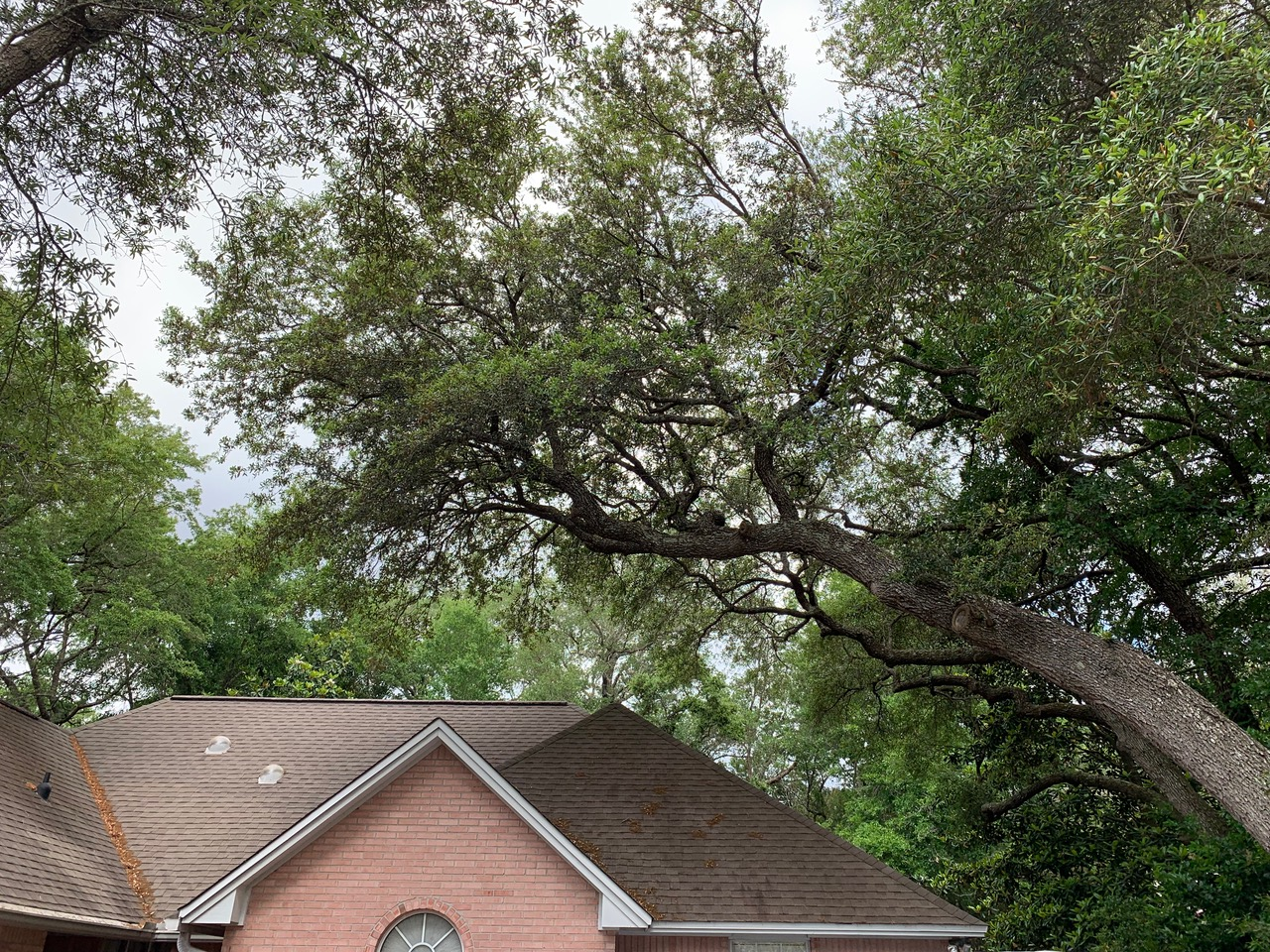 Seasonal Tree Care Services
