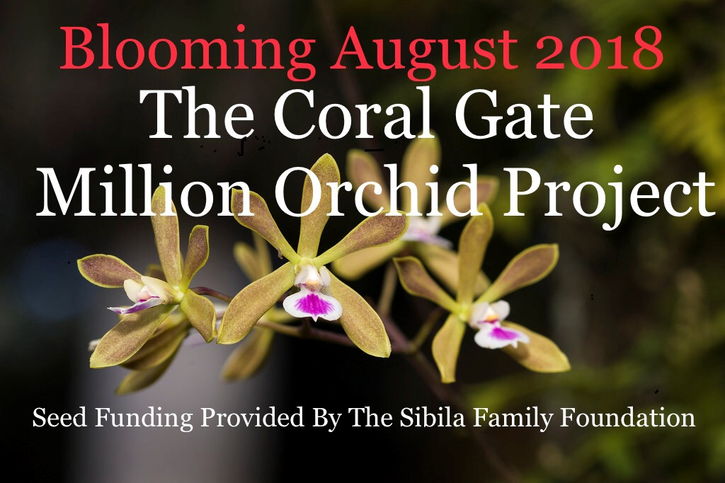 Coral Gate Million Orchid promo 1