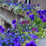 Vail-Mountain-Elegant-custom-flower-boxes