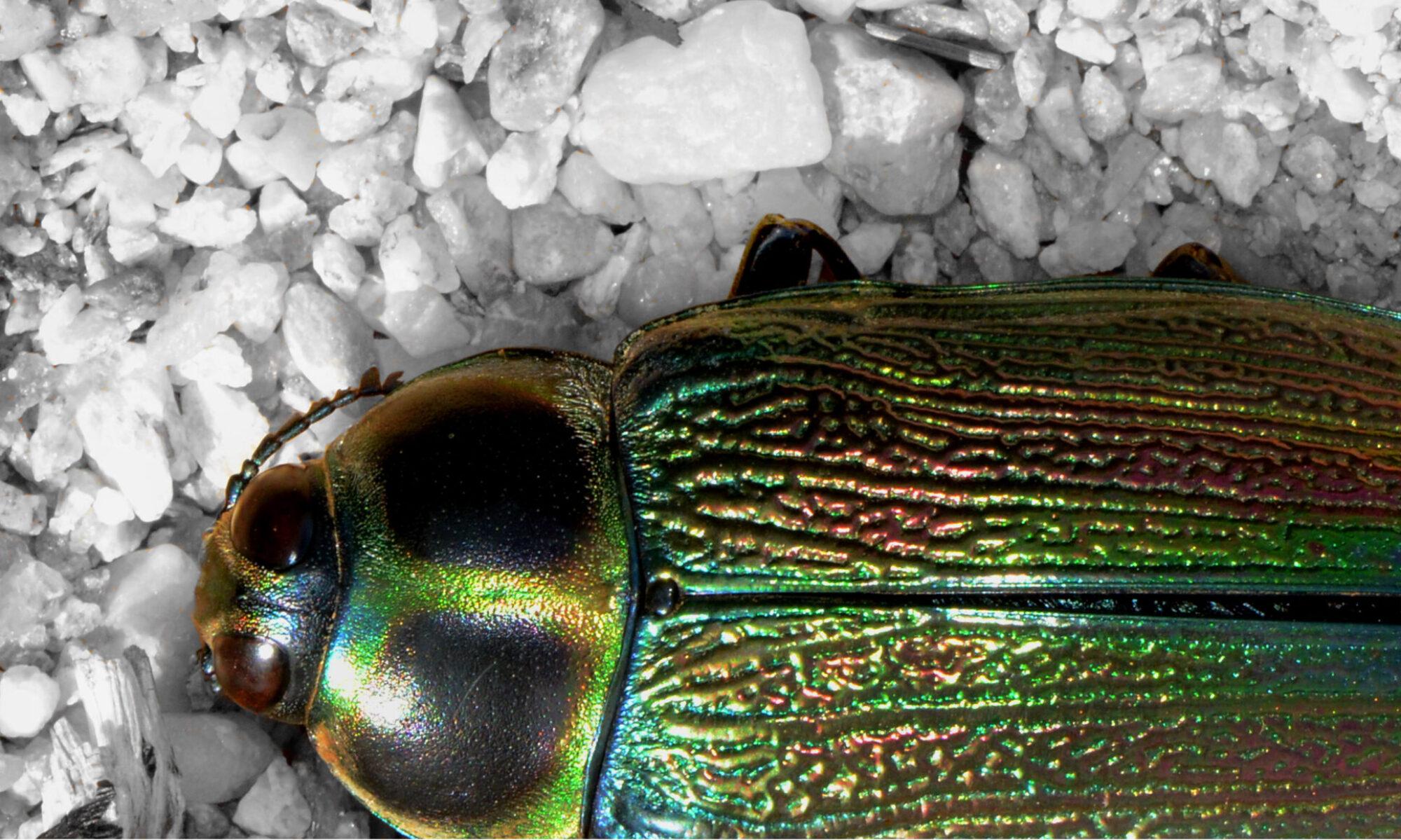 Insectos de Guatemala