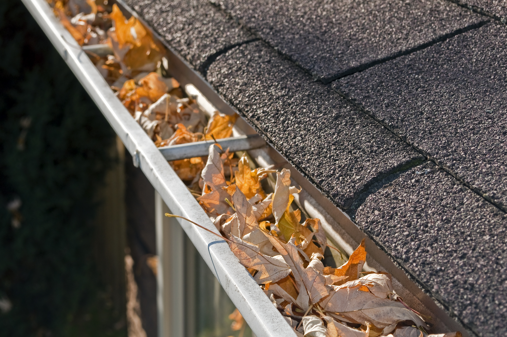 Leaves in rain gutter
