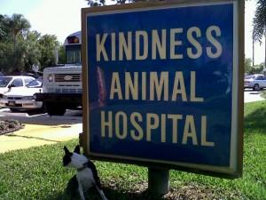 Bogart - animal hospital 3-31-10