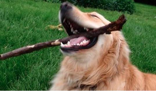 Happy dog with stick