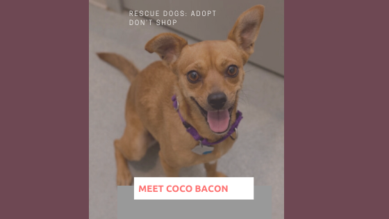 Rescue Dogs: Adopt Don't Shop, Coco Bacon finds her forever home
