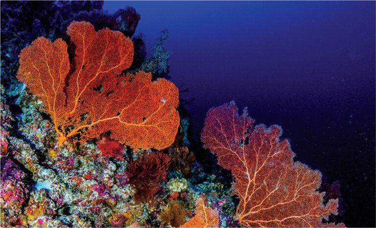 你不能不關注!海底珊瑚有多重要?失控的珊瑚白化原因是什麼?對我們又有什麼影響呢?