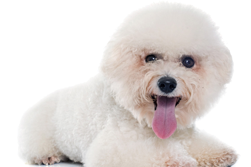 Doesn't Your Pet Deserve the Best Natural Treatments?