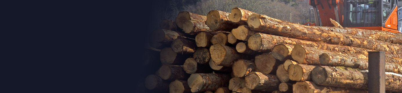 lumber-header