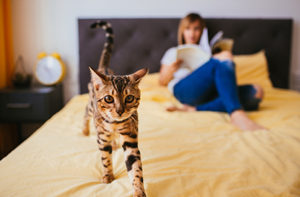 Cat and owner on a bed - Flea solutions