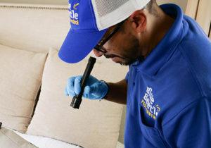 Flea Control Mobile Image