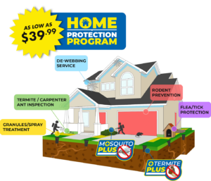 Home illustration of Home Protection Program Blue Beetle Pest Control