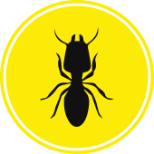 Termite Protection Icon - Blue Beetle Pest Control