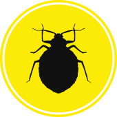 Bed Bug Icon - Blue Beetle