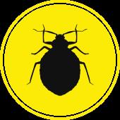 Bed Bug Icon - Blue Beetle