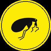 Flea Icon - Blue Beetle