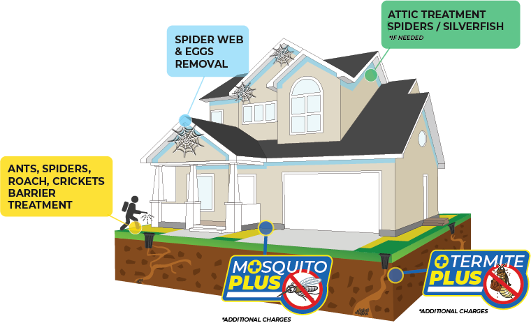 Basic Home Protection program with Blue Beetle Pest Control