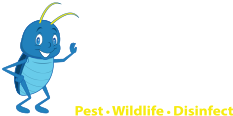 Blue Beetle Pest Control