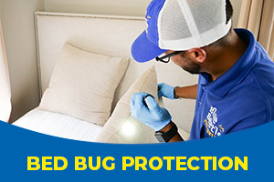 Bed bug technician looking for bed bugs in a residential home - Blue Beetle Pest Control