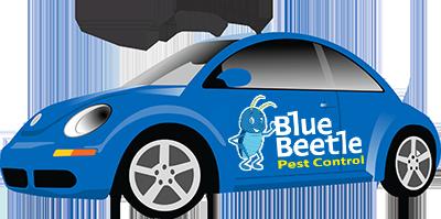 Volkswagen Blue Beetle - Blue Beetle Pest Control