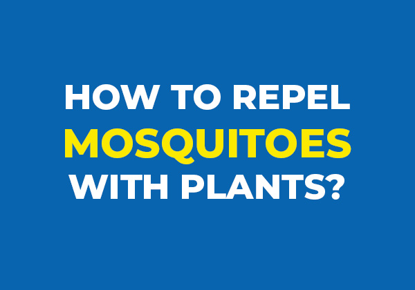 DIY Mosquito Solution - Blue Beetle Pest Control