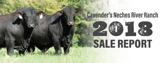 Cavender's Neches River Ranch 2018 Sale Report