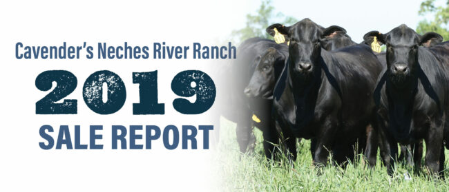 Cavender's Neches River Ranch 2019 Sale Report