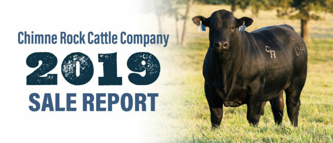 Chimne Rock Cattle Company 2019 Sale Report
