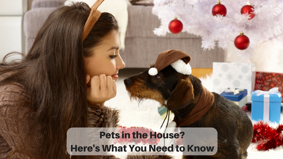 Pets in the House? Here's What You Need to Know