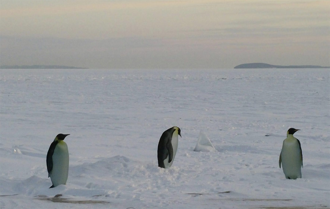 Penguin cut outs on frozen Lake Michigan