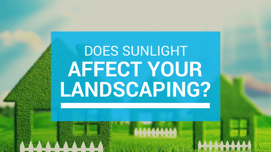 blog graphic - sunlight and landscaping