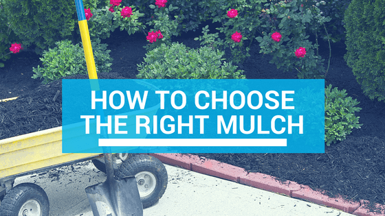 how to choose mulch in Florida - header image