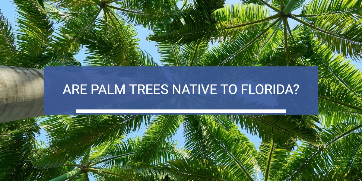 header image of palm trees for article