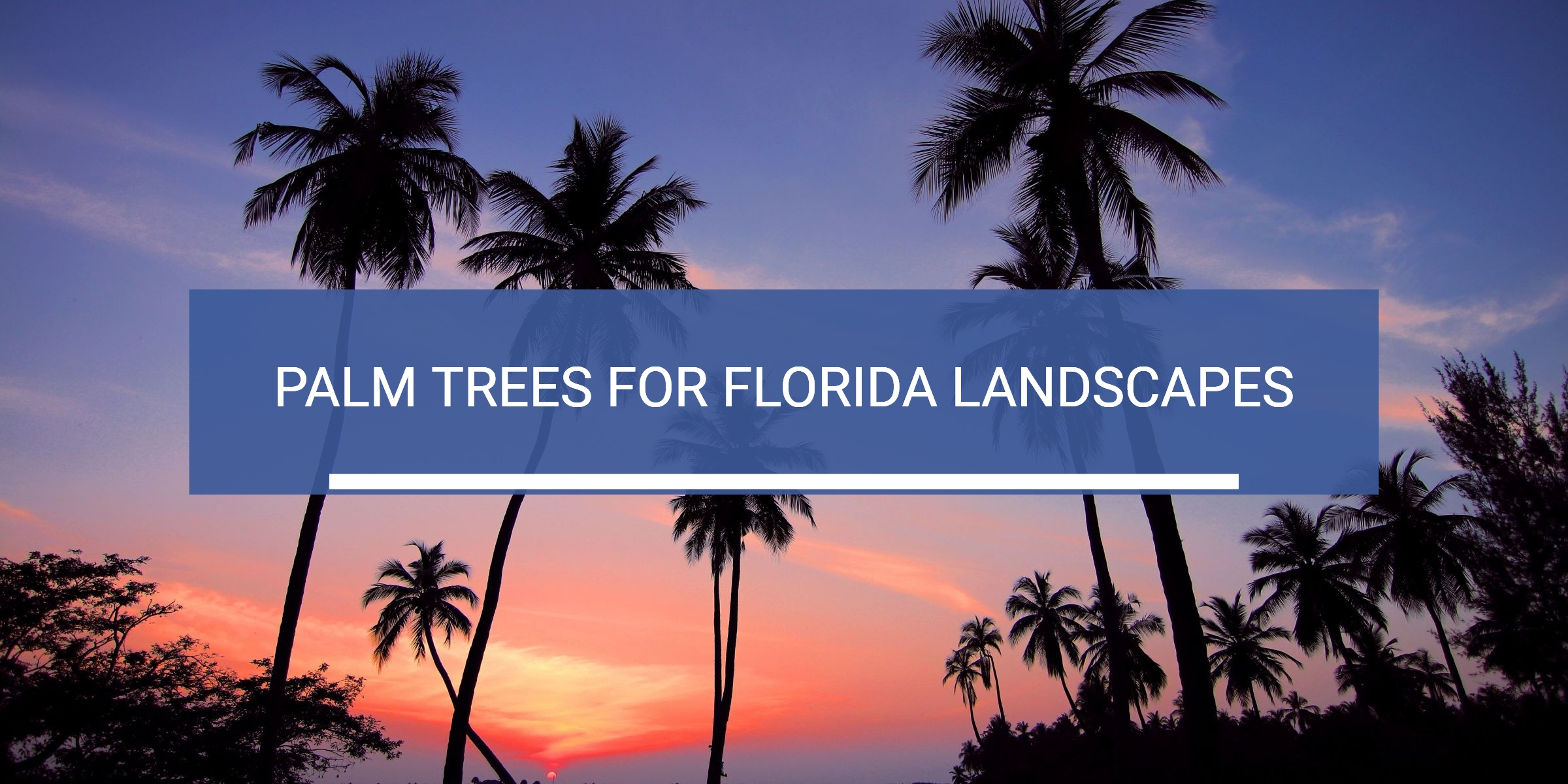 image of palm trees for florida landscaping article