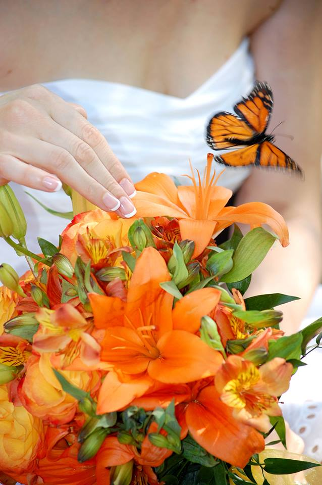 Wedding Butterfly Release