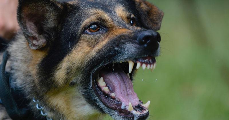 Dog bite claims